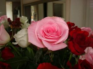 goody roses 2
