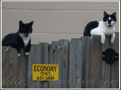 cats on fence