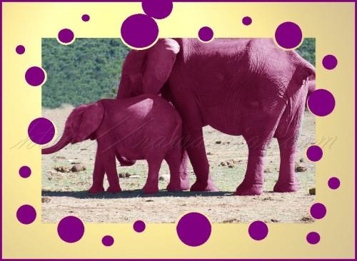 Pink or purple elephants