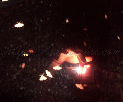 moths illluminated by flash