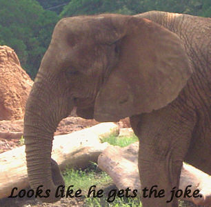 Elephant jokes - photo#27