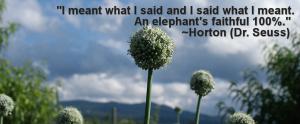 Horton_quote